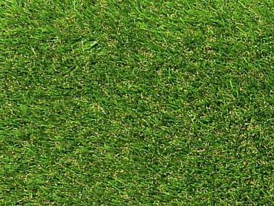 Surrey Premier Grass - Close Up Surrey Premier Grass